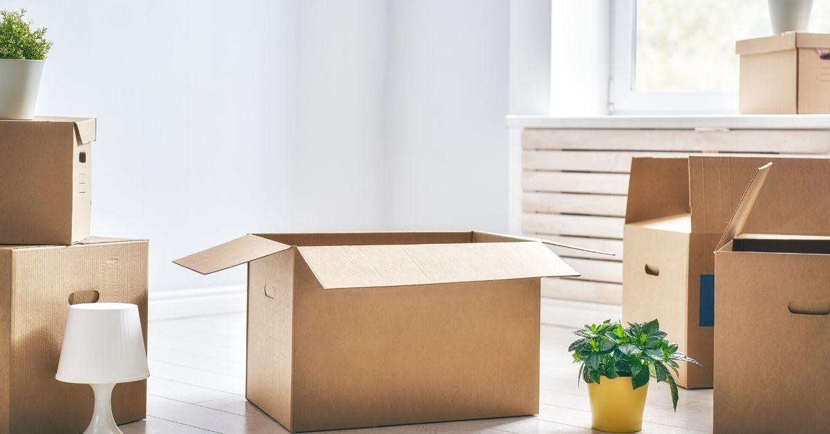 boite carton brune avec plante verte