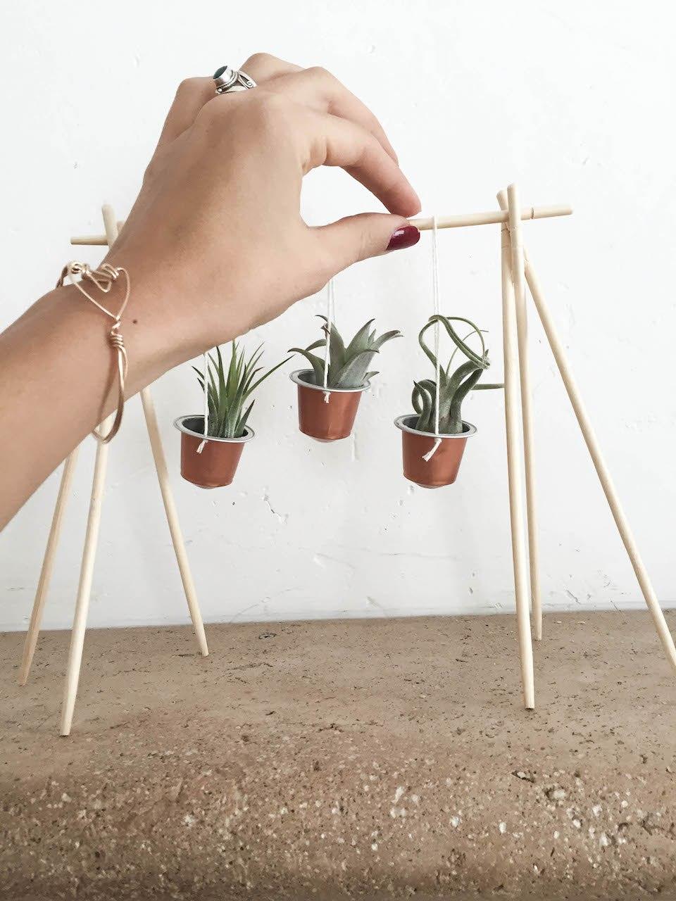 nespresso plante