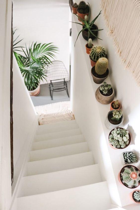 cactus muret escalier