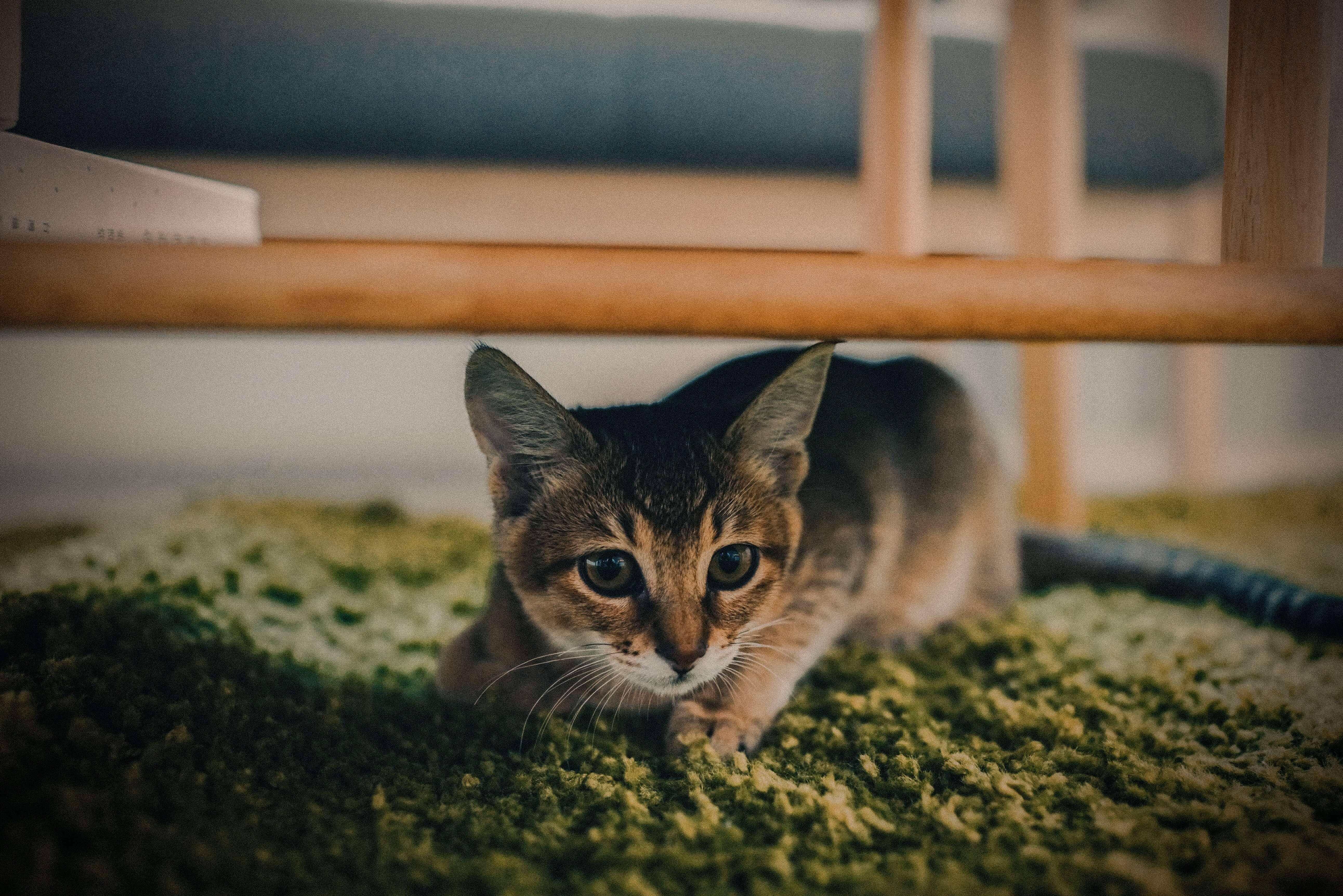 tapis avec chat