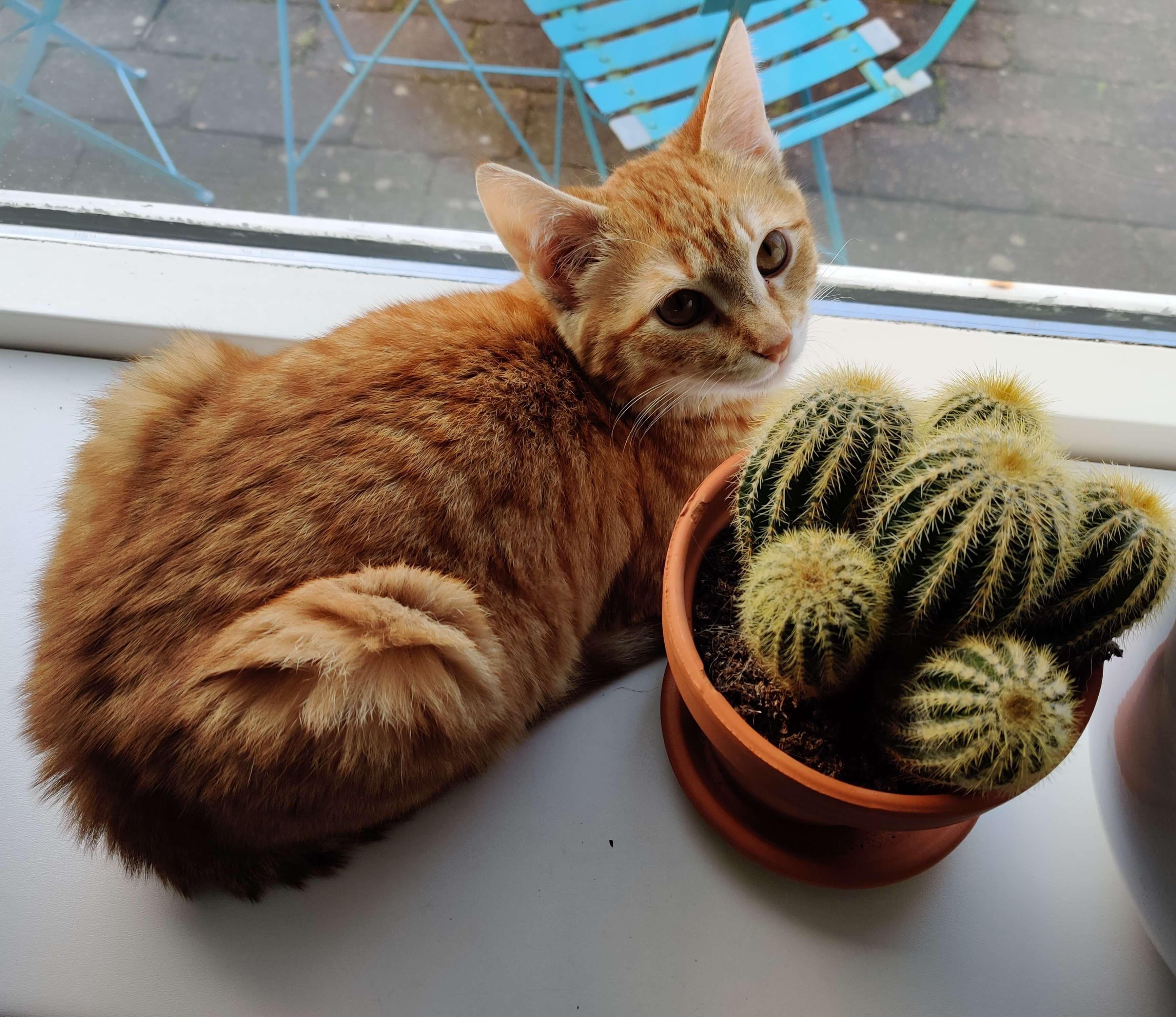 animaux et plantes