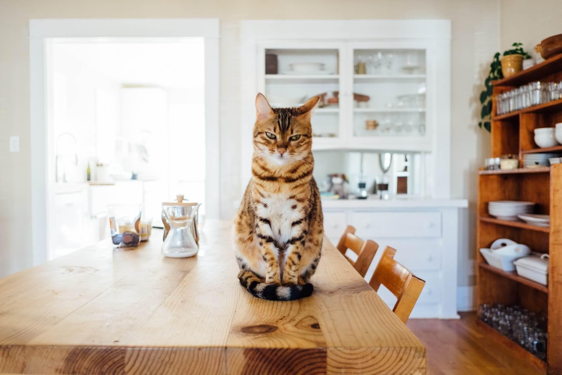 chat et objets fragiles
