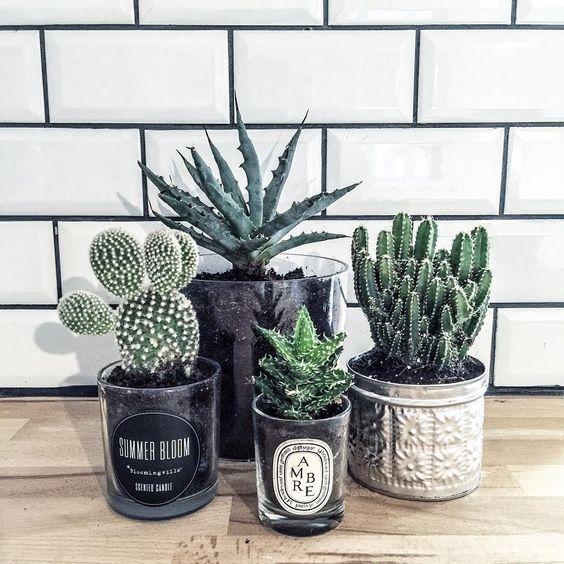 contenant chandelle pour cactus