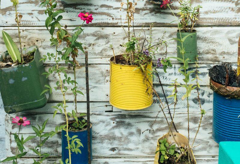 plante dans pot recycles