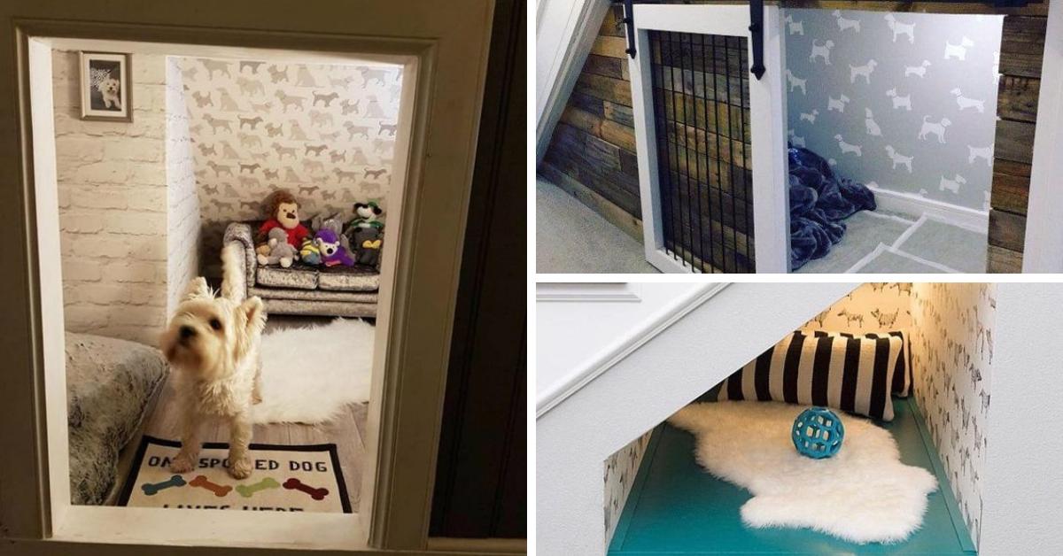 maison chien sous escalier