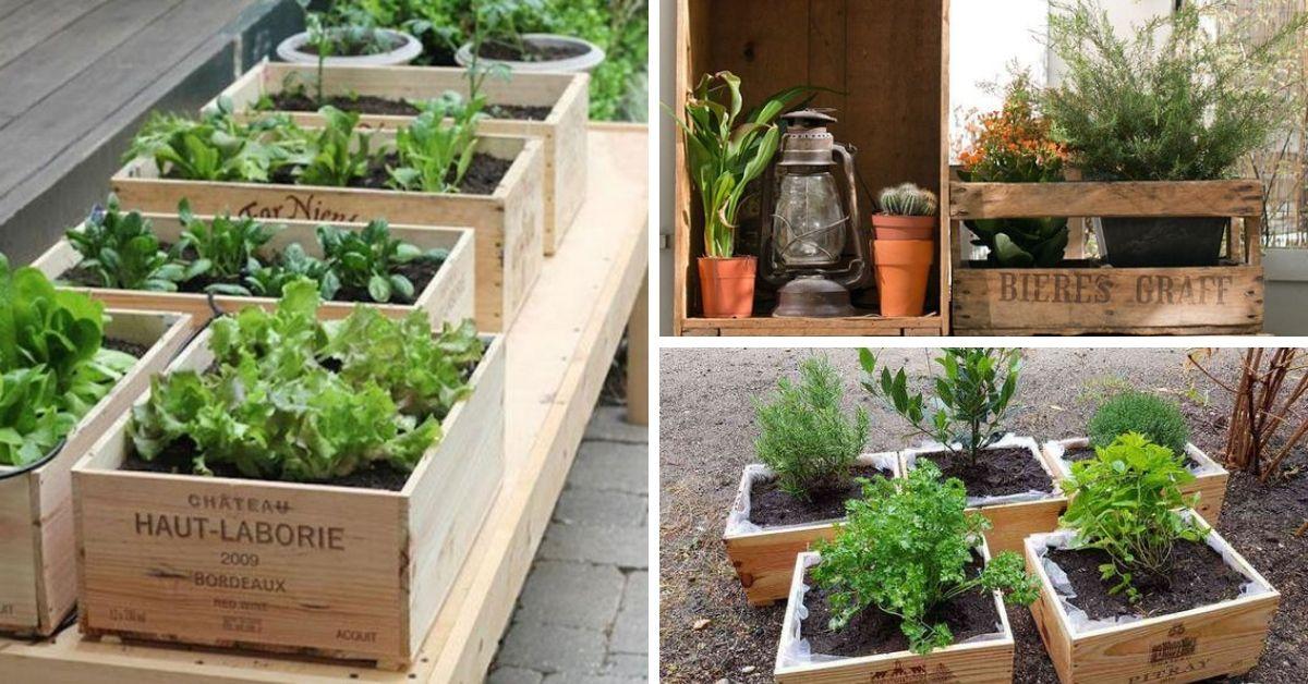 jardiniere dans une boite a bois