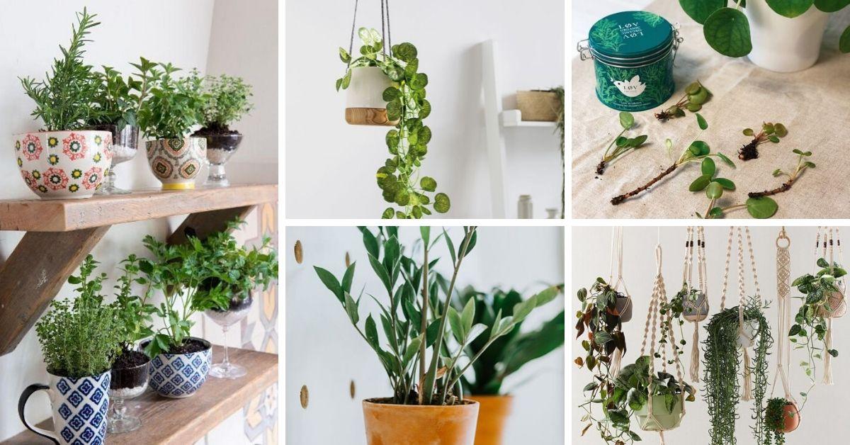 verdure et bouture printemps
