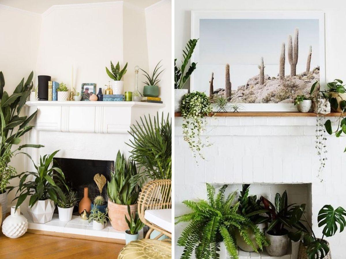 plantes deco cheminee foyer
