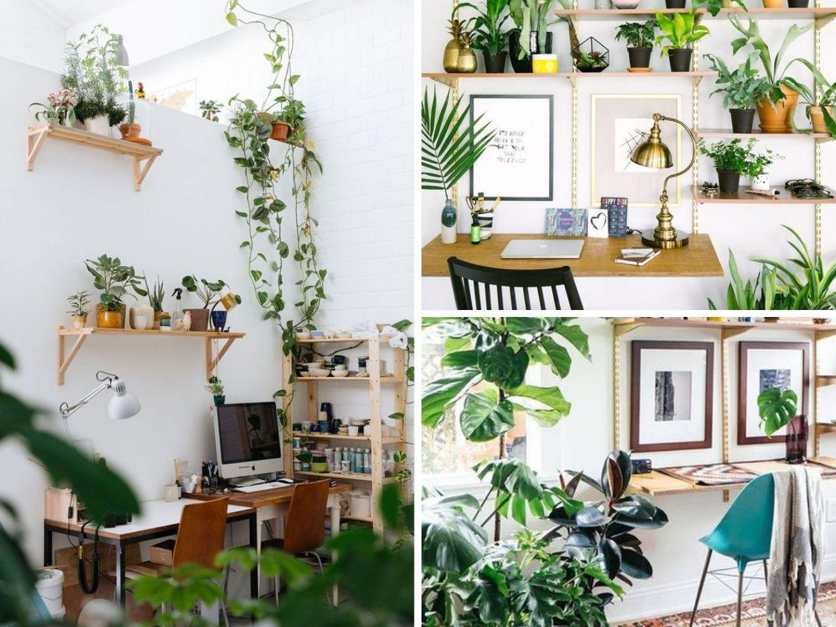 biljke u prostoru kućnog ureda